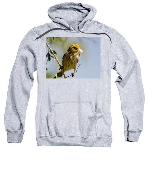 Verdin Building A Nest Sweatshirt
