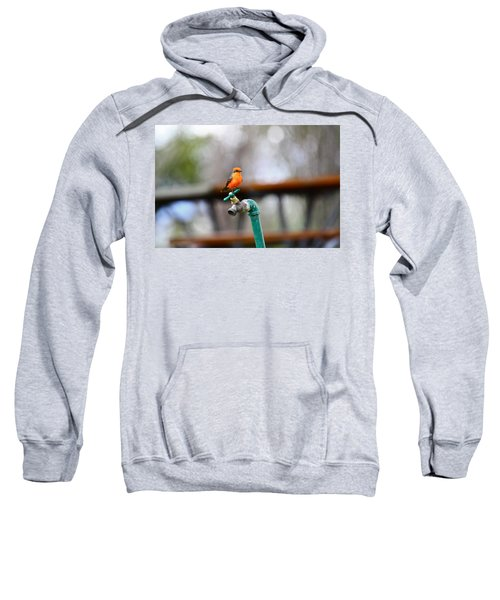 Vermilion Flycatcher Two Sweatshirt
