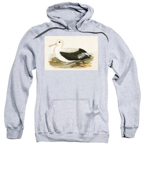 Wandering Albatross Sweatshirt