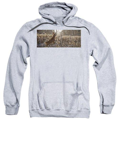Wary Buck Sweatshirt