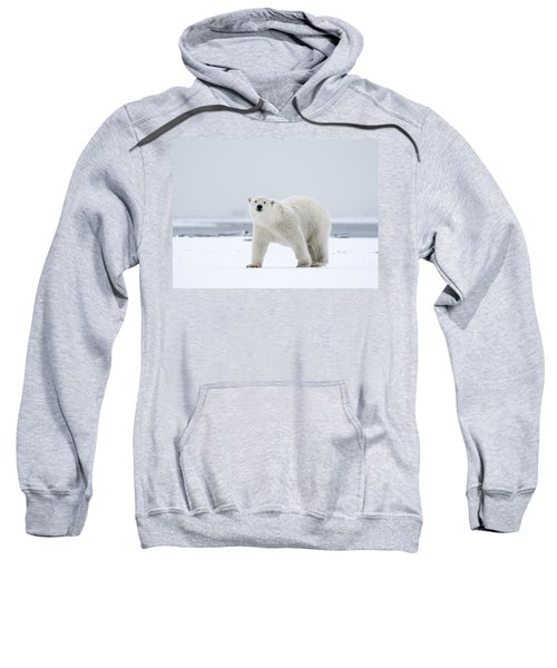Watchful In The Arctic Sweatshirt