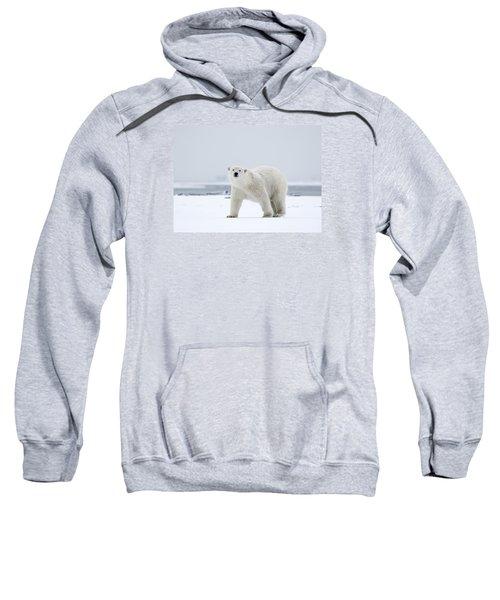 Watchful In The Arctic Sweatshirt