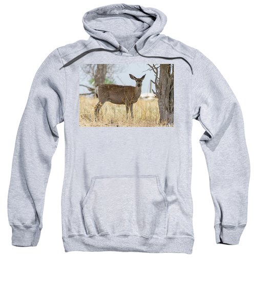 Watching From The Woods Sweatshirt by James BO Insogna