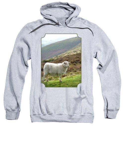 Welsh Mountain Sheep Sweatshirt by Gill Billington