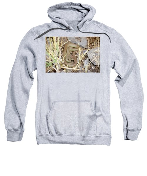 Western Yellow-bellied Racer, Coluber Constrictor Sweatshirt