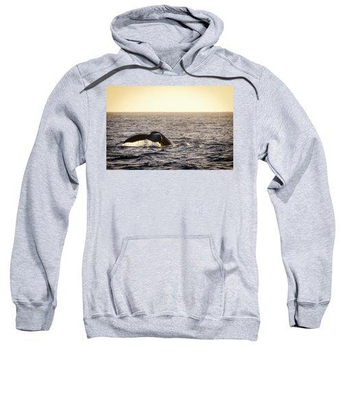 Whale Fluke Sweatshirt