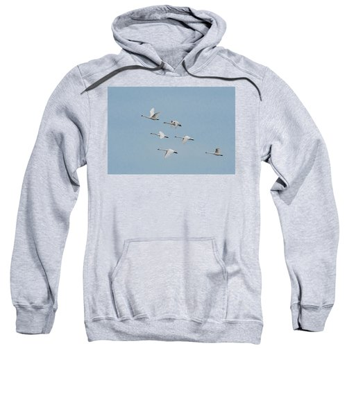 Whistling Swan In Flight Sweatshirt