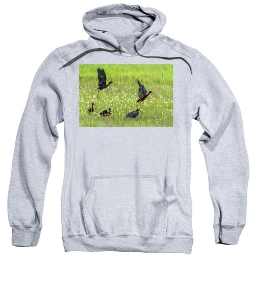 White-faced Ibis Rising, No. 1 Sweatshirt