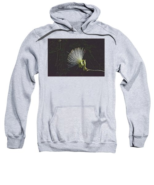 White Shaving Brush Pseudobombax Flower Sweatshirt