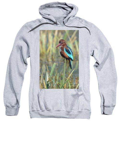 White-throated Kingfisher 13 Sweatshirt