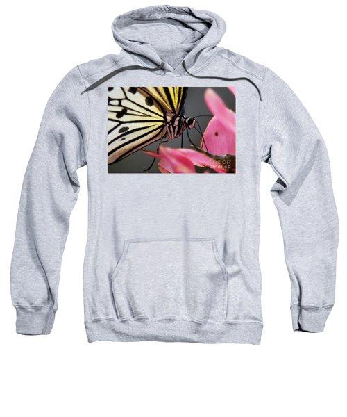 White Tree Nymph Butterfly Sweatshirt
