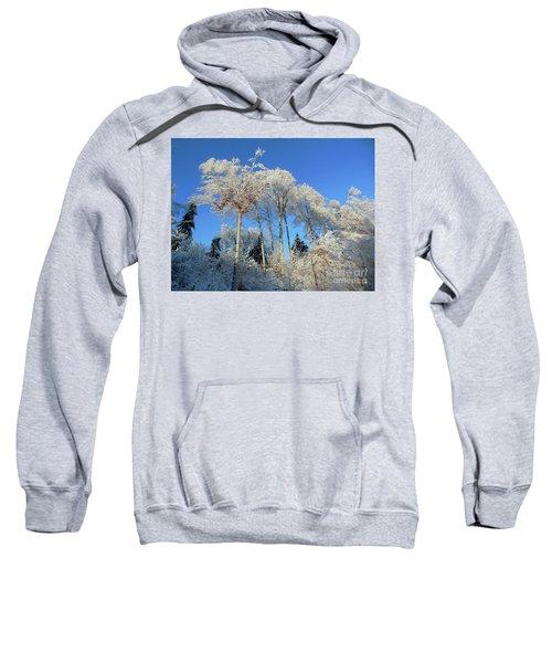 White Trees Clear Skies Sweatshirt