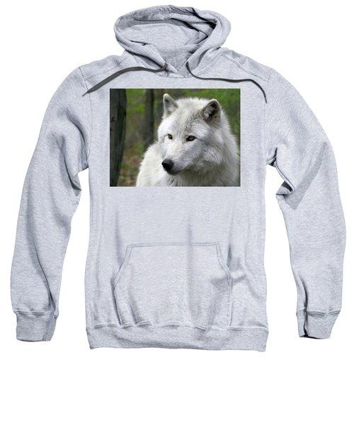 White Wolf With Golden Eyes Sweatshirt