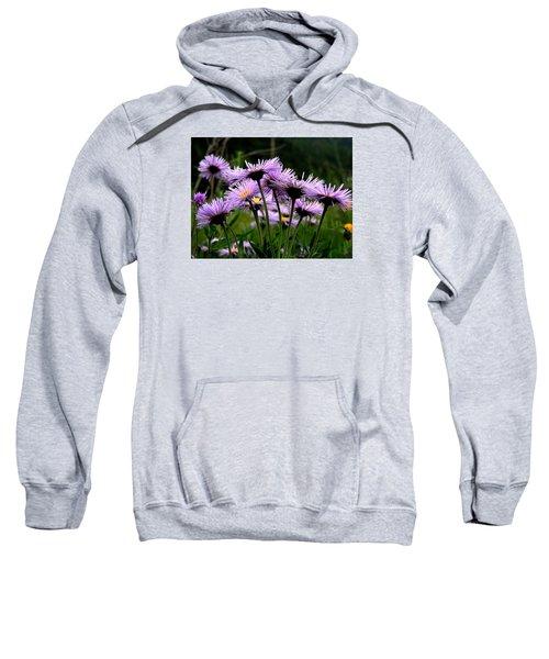 Wild Mountain Asters Sweatshirt