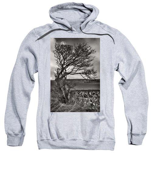 Windswept Tree In Winter Sweatshirt