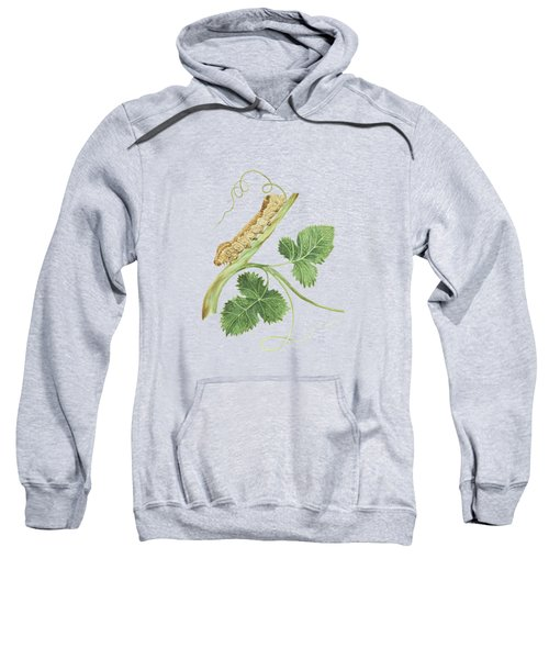 Wine Branch With The Metamorphosis Of A Future Female Butterfly By Cornelis Markee 1763 Sweatshirt