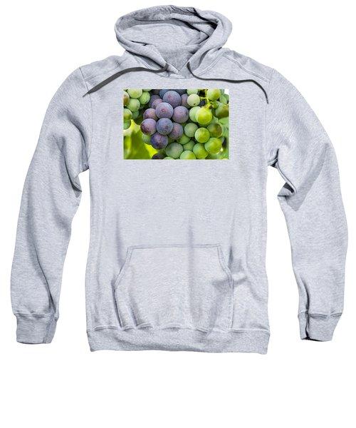 Wine Grapes Close Up Sweatshirt