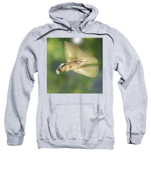 Wing Shadow Sweatshirt