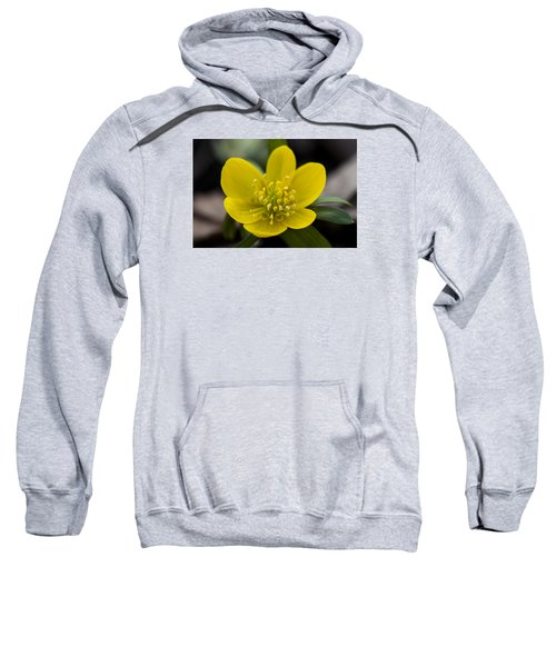 Winter Aconite Sweatshirt