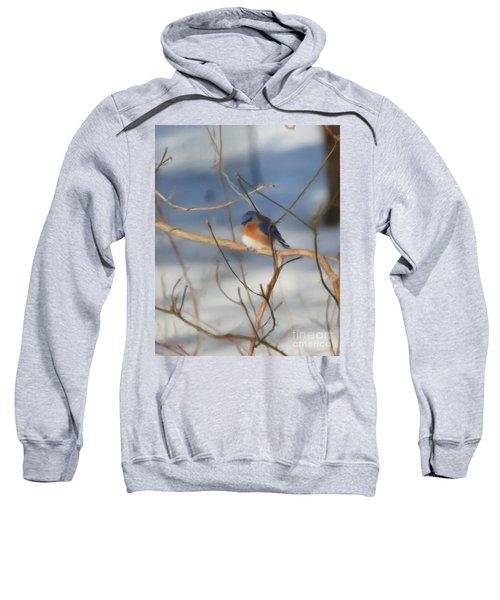 Winter Bluebird Art Sweatshirt