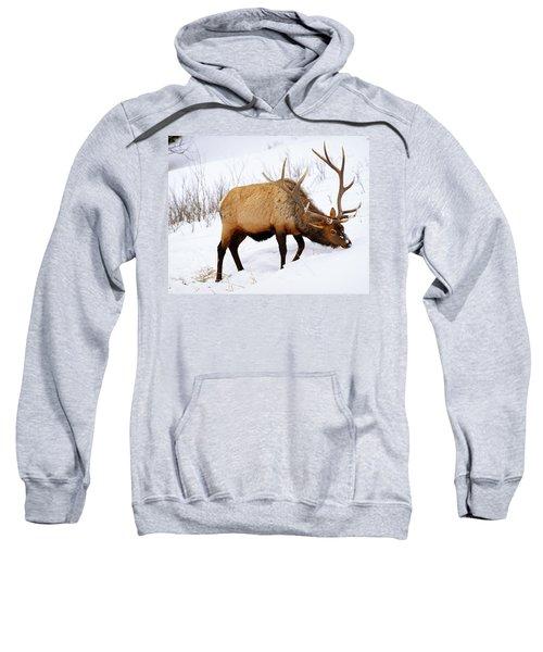 Winter Bull Sweatshirt