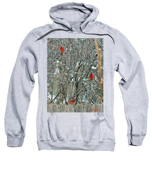 Winter Cardinals Sweatshirt