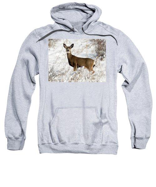 Winter Doe Sweatshirt
