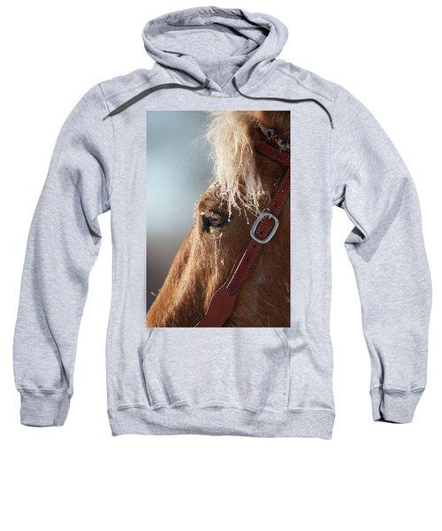 Winter Mustang Eye Sweatshirt