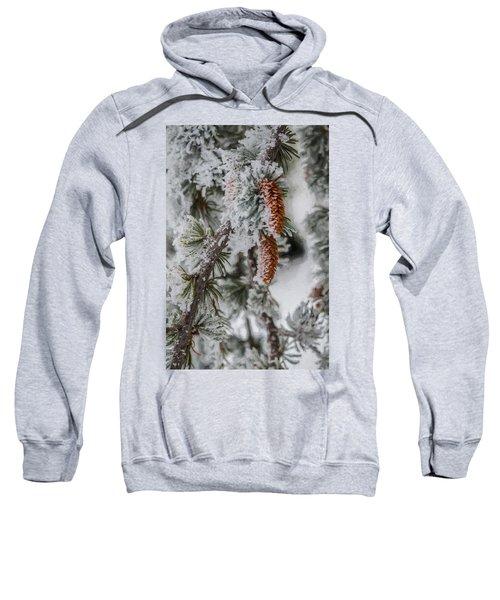 Winter Pine Cones Sweatshirt