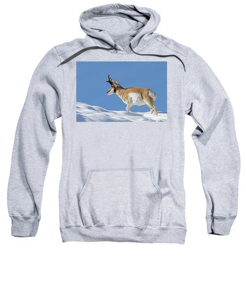 Winter Pronghorn Buck Sweatshirt