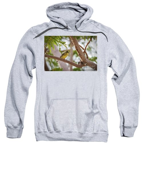 Winter Visitor Sweatshirt