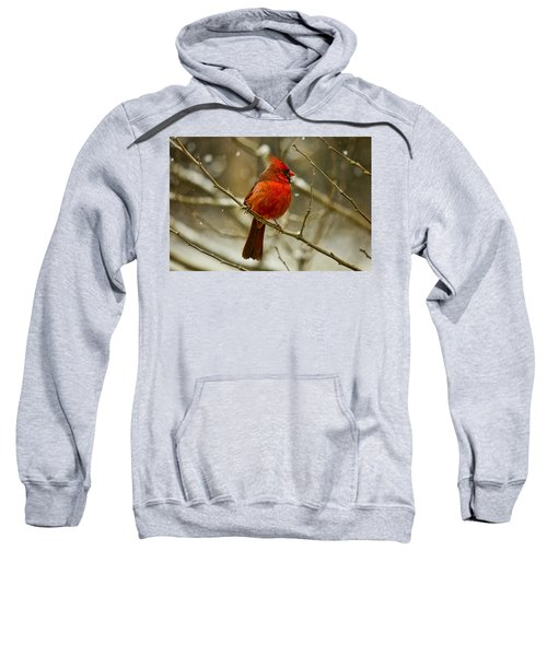 Wintry Cardinal Sweatshirt