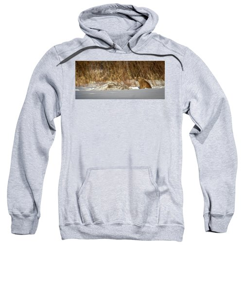 Yampa Glare  Sweatshirt