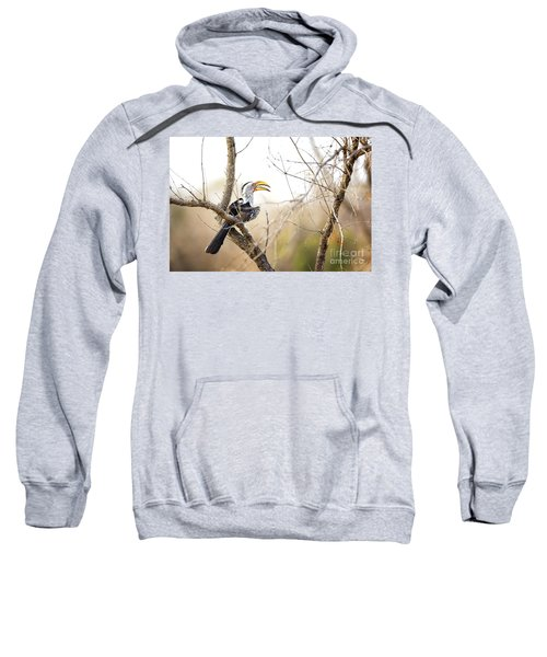 Yellow-billed Hornbill Sitting In A Tree.  Sweatshirt