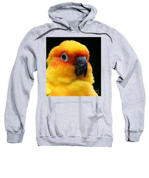 Yellow Parrot Closeup Sweatshirt