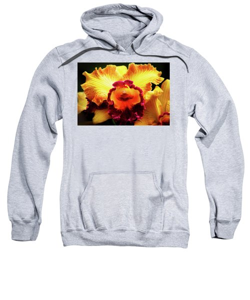 Yellow-purple Orchid Sweatshirt