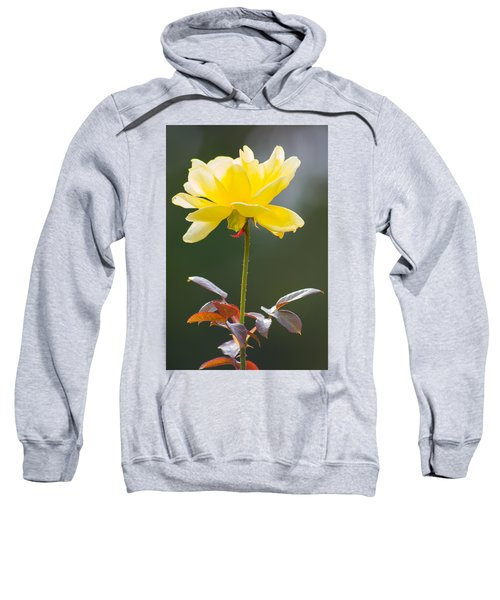 Yellow Rose Sweatshirt