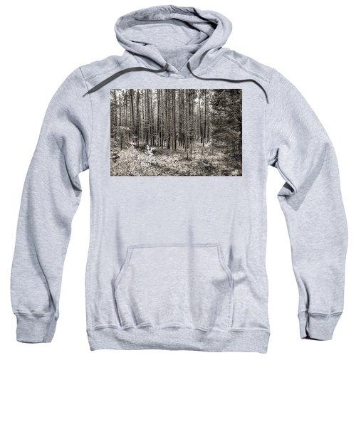 Yellowstone Fire Burn Scar Sweatshirt