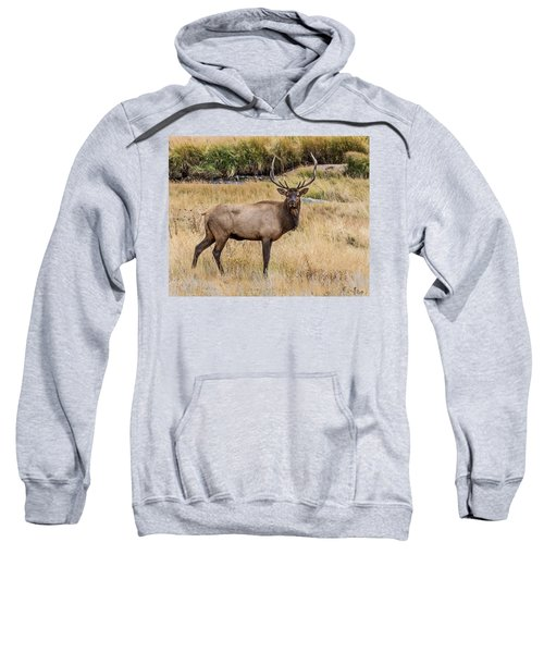 Young Bull Elk Sweatshirt
