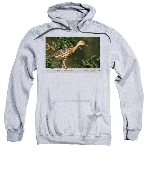 Young Duck Sweatshirt