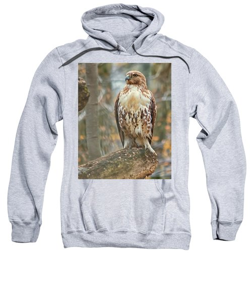 Young Red Tailed Hawk  Sweatshirt