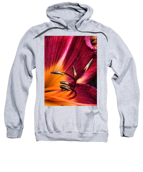 Youthful Joyride Sweatshirt