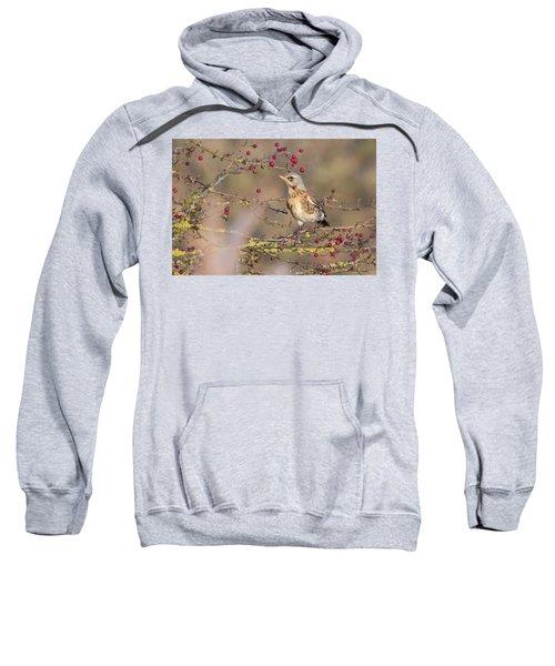 Fieldfare Sweatshirt