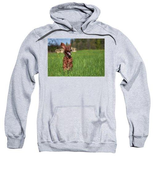 Happy Setter Sweatshirt