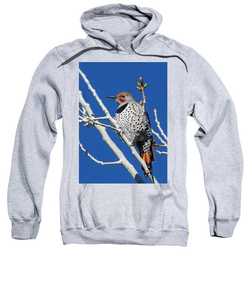 Northern Flicker Woodpecker Sweatshirt