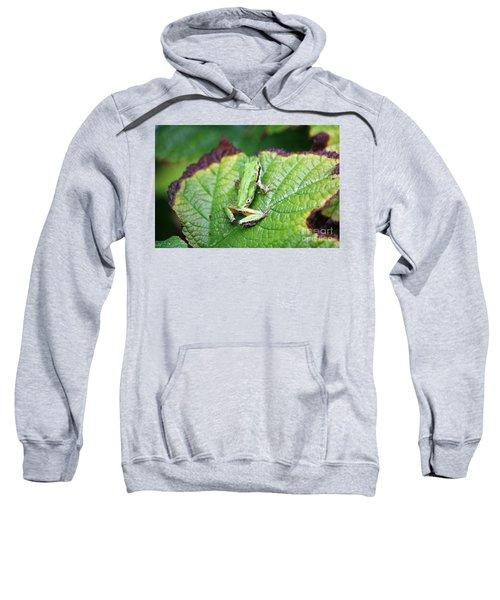 Tree Frog On Leaf Sweatshirt
