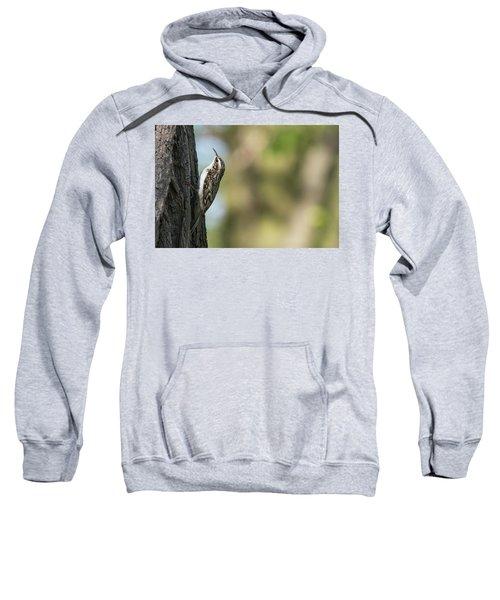 Treecreeper Sweatshirt