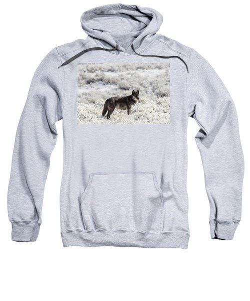 W23 Sweatshirt