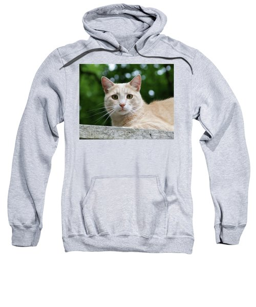 Orange Tabby  Sweatshirt