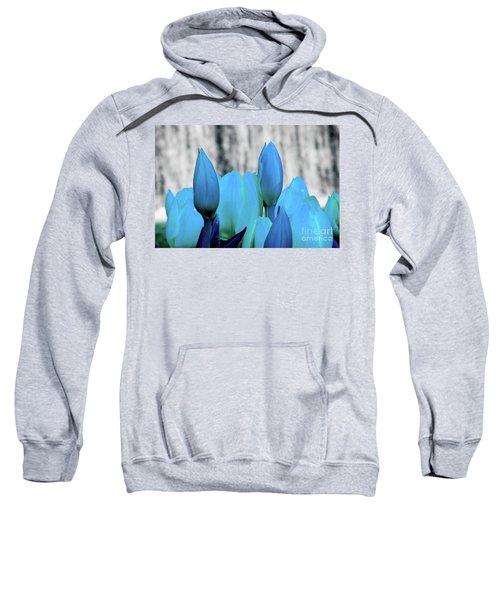 4-8-2010img6893abcdefghijk Sweatshirt